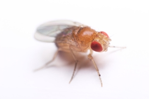 Learning From Flies: Insights Into Treatment for the Rare Genetic Disease, NGLY1 Deficiency